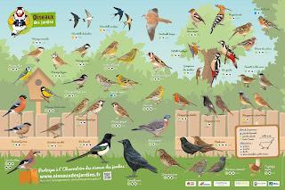 https://www.oiseauxdesjardins.fr/index.php?m_id=1127&item=18