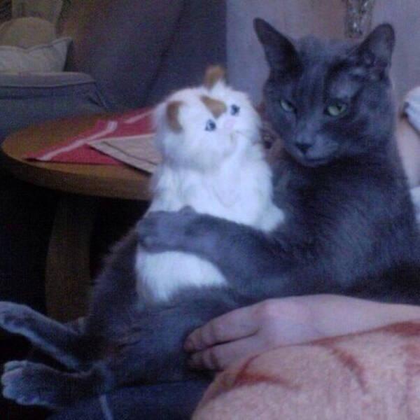 gato e a gatinha