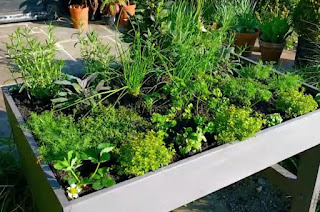 Alan Titchmarsh planter