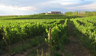 Gobierno de Río Negro lanza plan que permitirá venta de vinos en envases menores directamente en bodegas