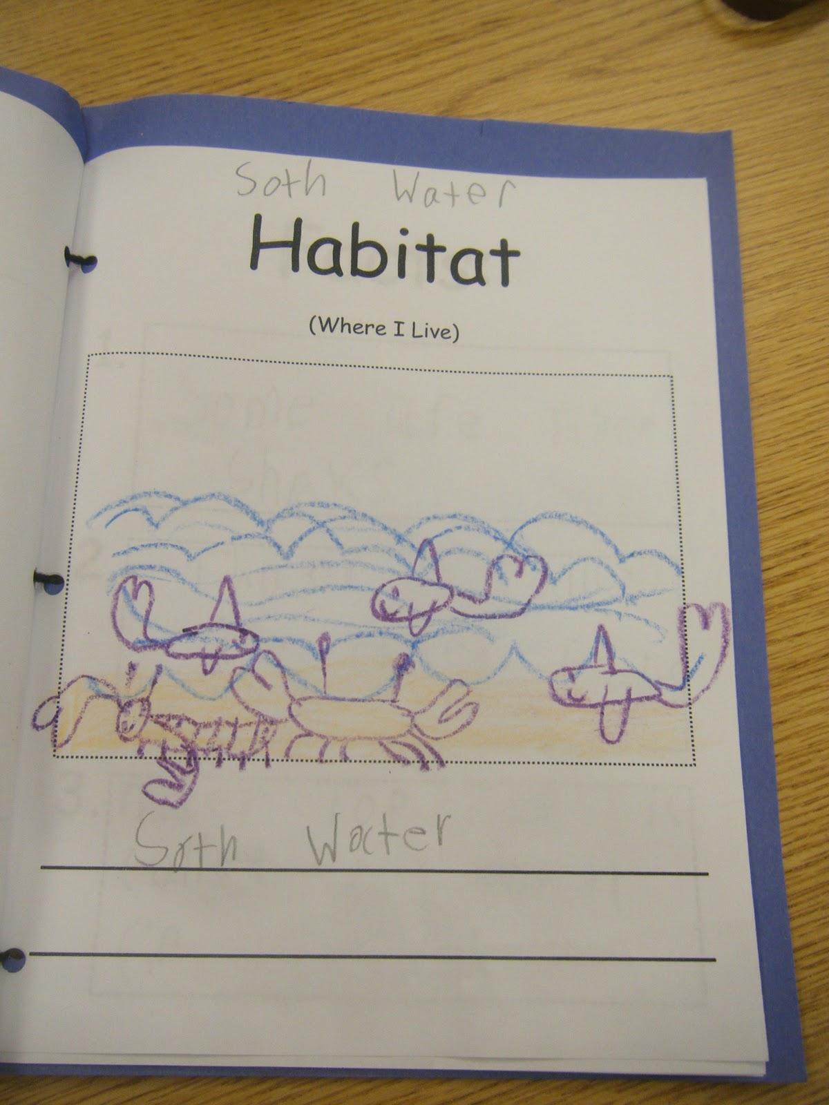 Ms M S Kg Class Kindergarten Informational Non Fiction Report Writing