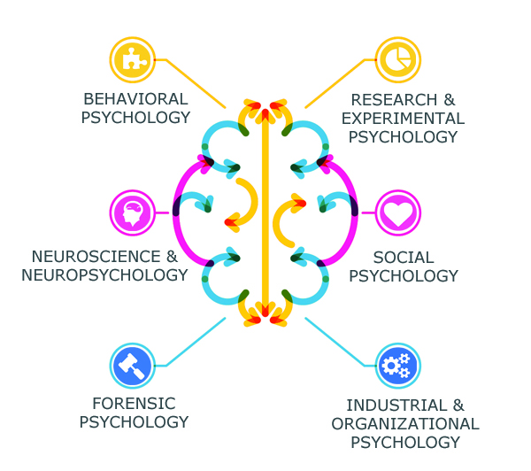 Brain culture thought degrees and careers in psychology for Psychologie nc 2016