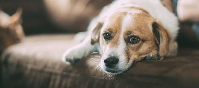 Με ποιον τρόπο ζητάνε συγγνώμη τα σκυλάκια μας;