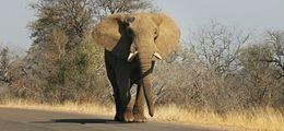 cómo-hacer-safari-coche-alquiler