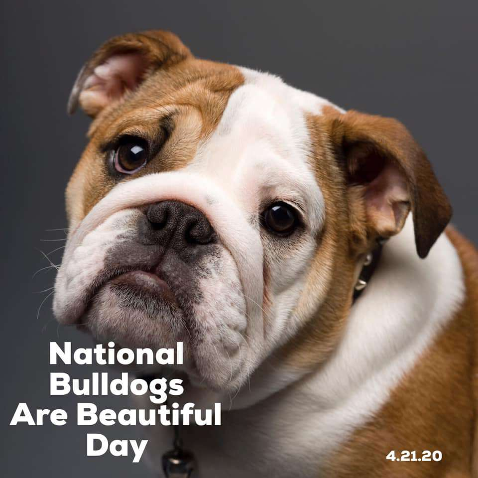 National Bulldogs Are Beautiful Day Wishes Beautiful Image