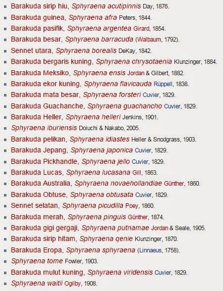 atau umumnya orang memanggil dengan nama Info Lengkap Ikan Alu atau Barracuda
