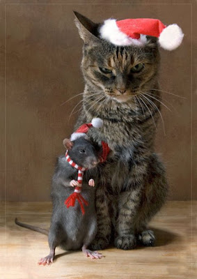 chat souris noel