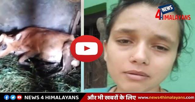 हिमाचलः फार्मासिस्ट की गलती से गाय के पेट में मर गया बछड़ा, दुखी लड़की का वीडियो वायरल
