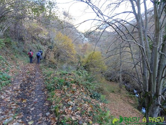 Bosque zona boscosa por el Valle del Coto de la Pola