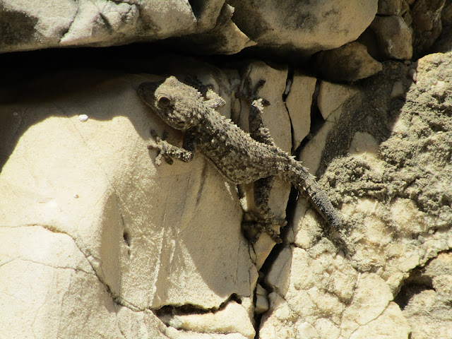 gecko-calanques