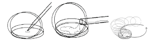 Pour Plate (agar tuang) teknik isolasi mikrobiologi