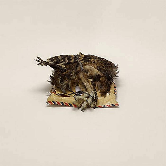 cadaver de ave para decoracion