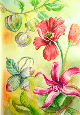 watercolour and pencils colorurfull