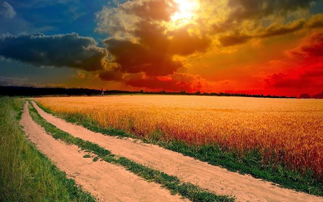 Foto van graanvelden bij ondergaande zon