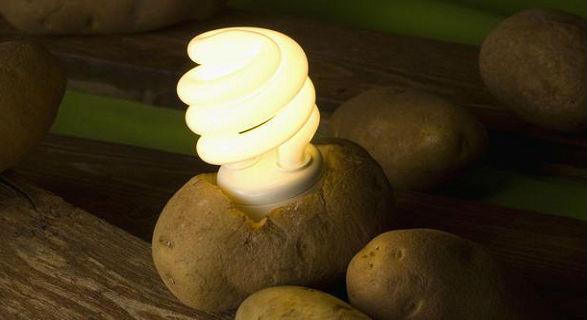 kita semua tahu bahwa kentang merupakan salah satu jenis umbi Cara Nyalakan Lampu dengan Kentang Tanpa Listrik
