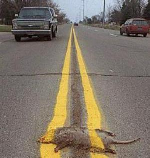 Funny Picture - Having a bad day? Rat Road Kill