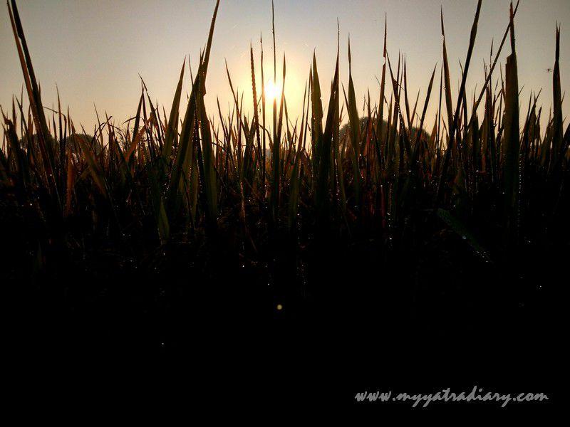 Nature weaving magic in the fields in Varanasi