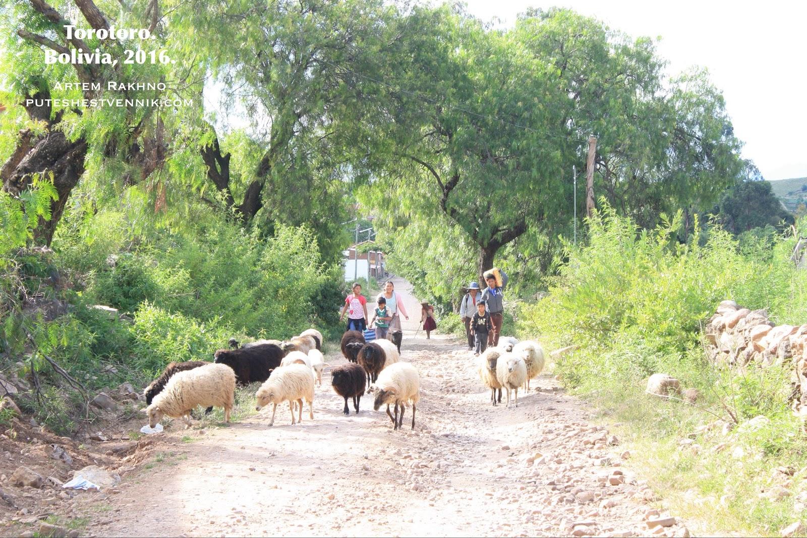 Овцы и пастухи
