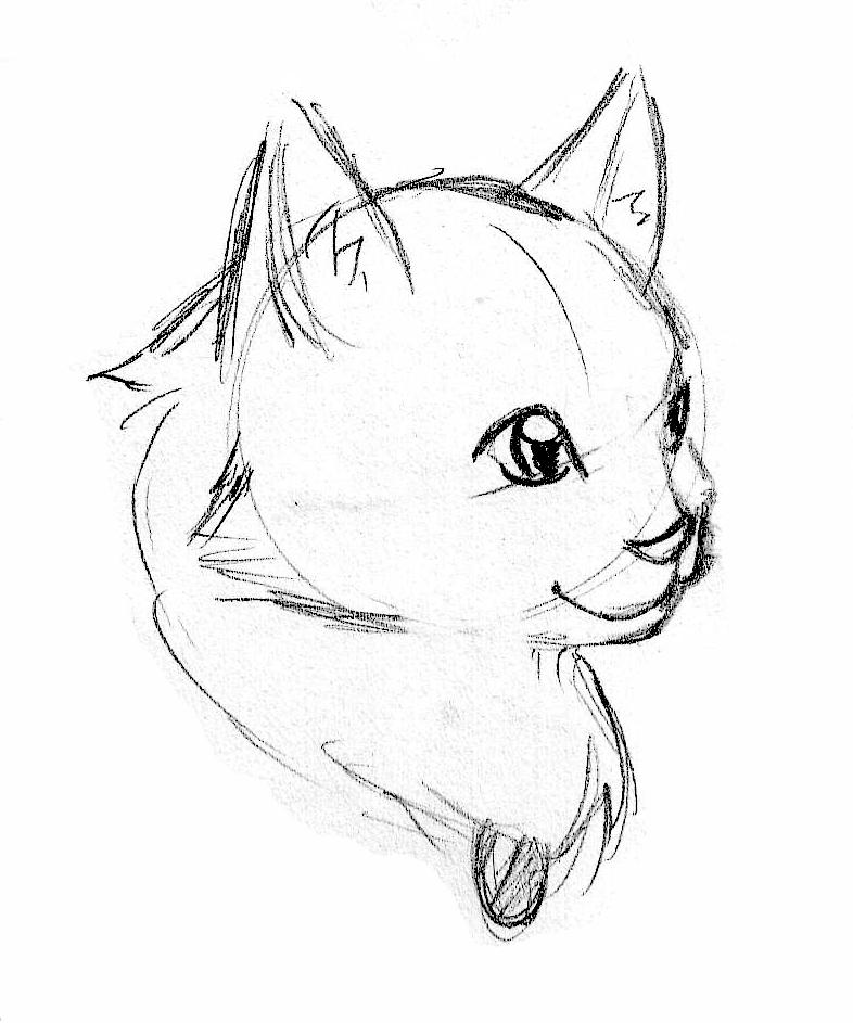 christina brehove cat sketches Cat Ad cat sketches