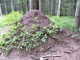 formicaio boscolungo abetone
