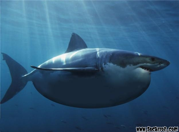Tiburón Gordo.