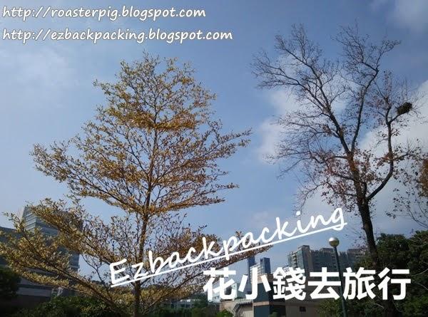 根德道花園紅葉:香港市區紅葉景點