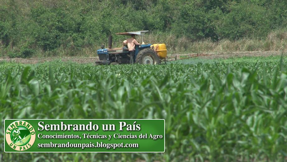 fumigando plantación de maíz