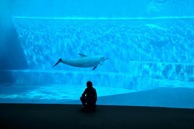 homeschooling e delfini