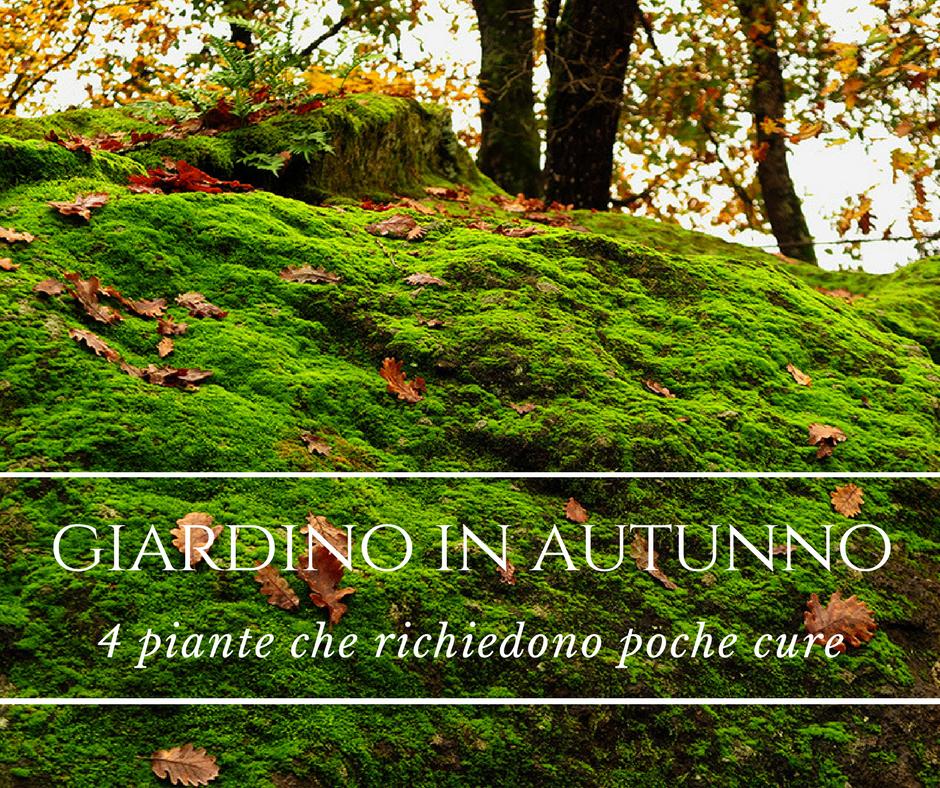 Il Giardino In Autunno Quattro Piante Che Richiedono Poche Cure