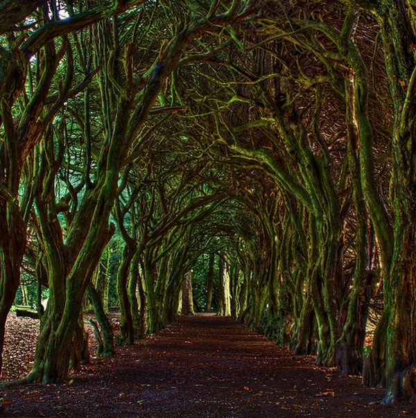 10. Tree Tunnel, Meath, Ireland - Top 10 Enigmatic Places