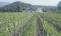 viticultura ecologica