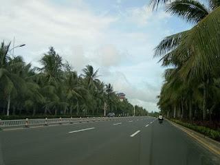 pohon kelapa di kota haikou provinsi hainan