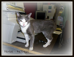 UPDATE 8/14/11 7/23/11 Herbie Needs You. Hardly Any Cats Make It Out.