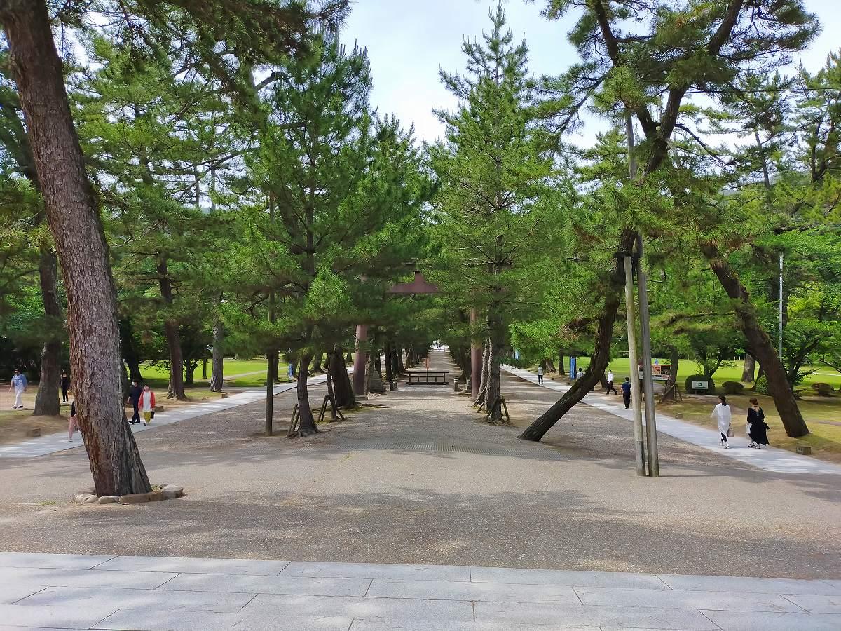出雲大社本殿までの参道にはズラッと松が植えられています。