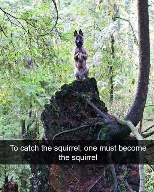 To catch the squirrel, one must become the squirrel