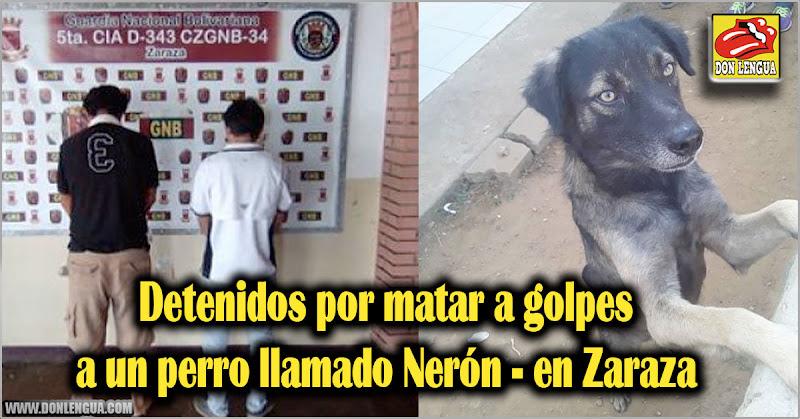 Detenidos por matar a golpes al perro Nerón en Zaraza