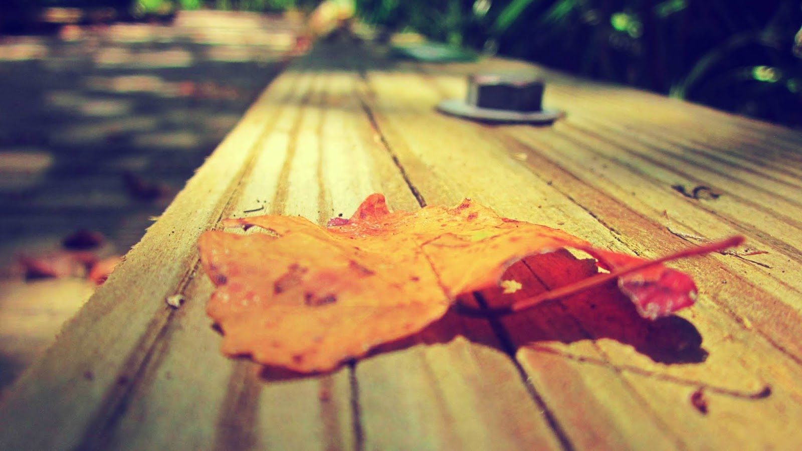 A crisp fall leaf on a boardwalk in mother nature in Boca Ciega Millennium Park in Seminole, Florida
