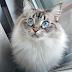 Beautiful eyes cute cat