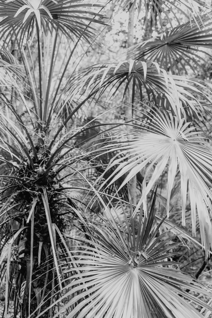 b&w palm tree