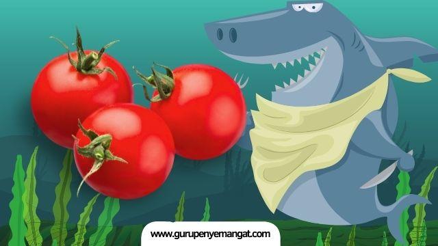 Pantun Ikan Hiu Makan Tomat Baper, Lucu dan Romantis