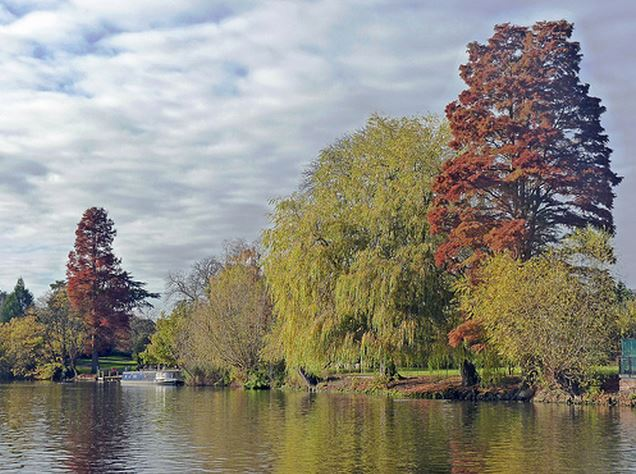 Buy wallart of River Avon in Autumn