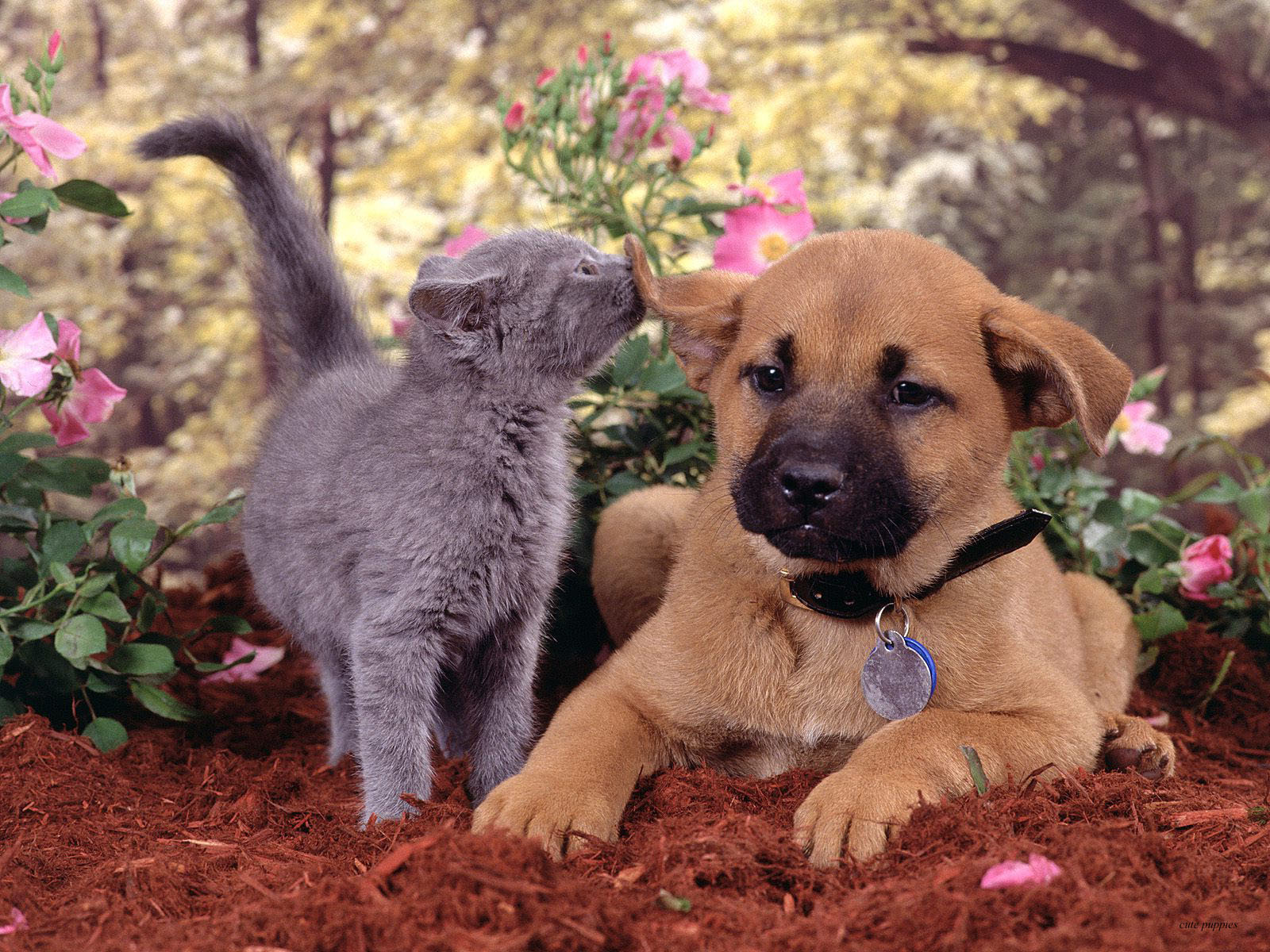 Dog playing with a cat stock image. Image of kitty ... |Playing Cats And Dogs