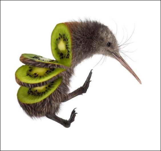 Gambar Unik Hewan Dan Makanan Menjadi Satu  Kancoet Bolonk