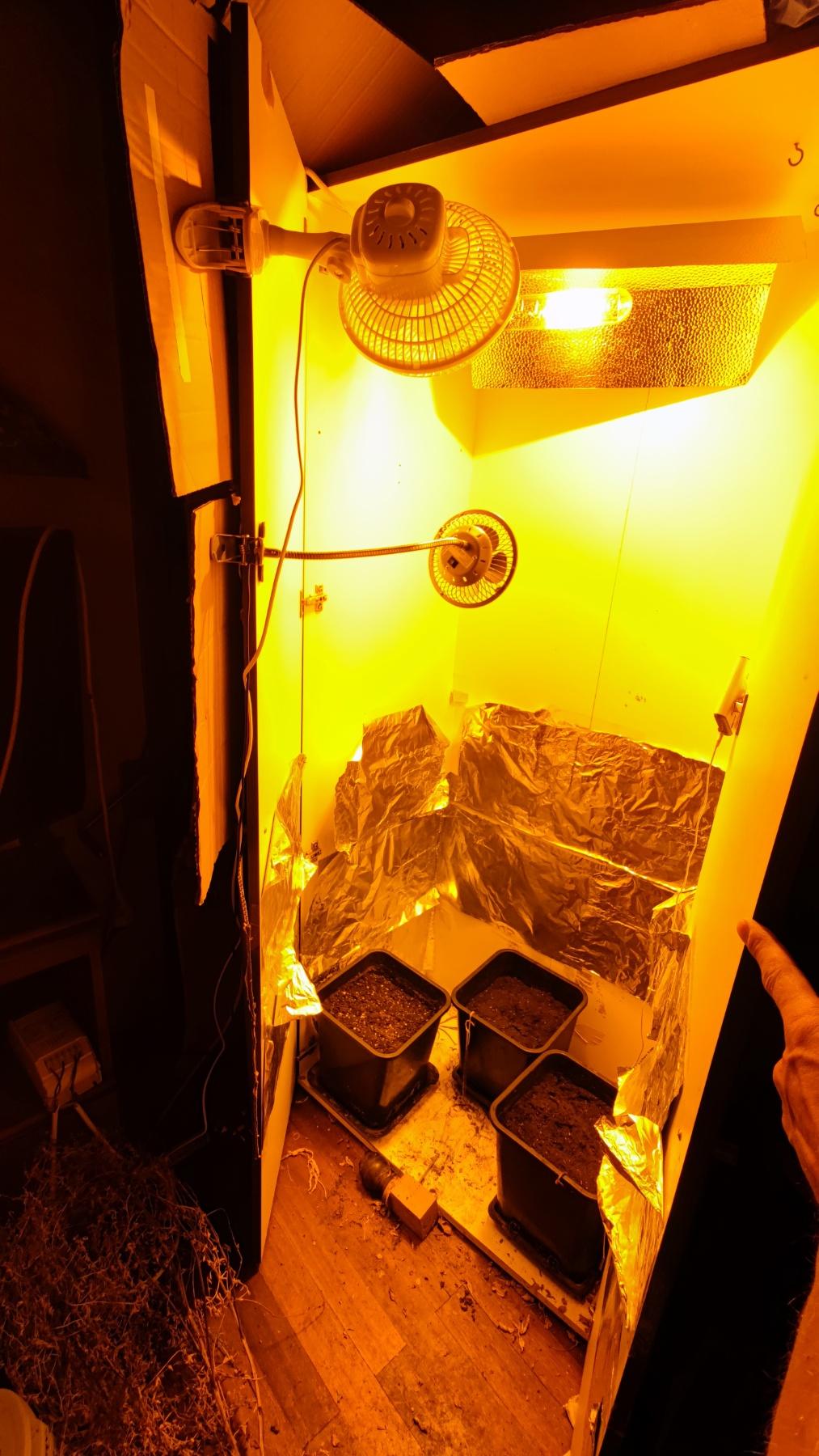 Καβάλα: Έστησε φυτώριο κάνναβης μέσα στο σπίτι του - ΦΩΤΟ