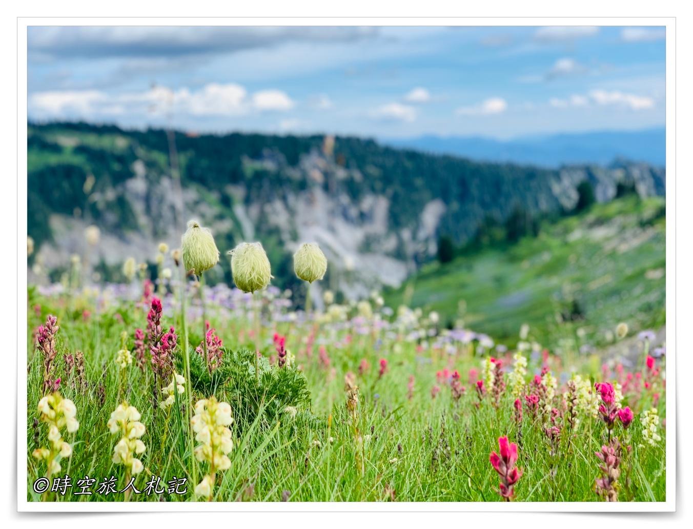 2019/08 西雅圖自駕行程: 西雅圖Seattle – 雷尼爾山國家公園Mt Rainier National Park – 奧林匹克國家公園 Olympic National Park