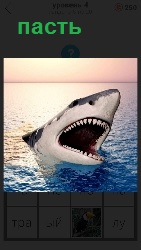 пасть акулы из воды