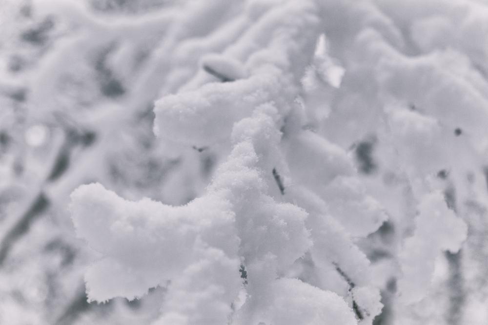 talvi, luonto, winter, winterwonderlans, lumi, snow, scandinavia, stillmoments, nature, naturephotography, luontovalokuva, Visualaddict, valokuvaaja, Frida Steiner, Auroran puisto