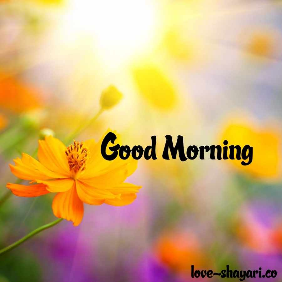 gud morning with flowers