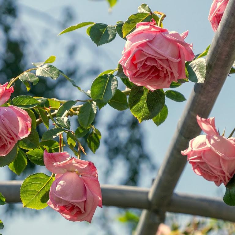 100+ Gambar Bunga Cantik Berdasarkan Nama Dan Penjelasannya