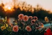 Hindi Kahaniya -   फूलो का कुर्ता - यशपाल